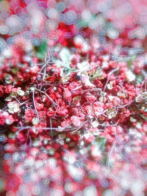 这是一张关于大红袍花椒 特级 干花椒 的产品图片
