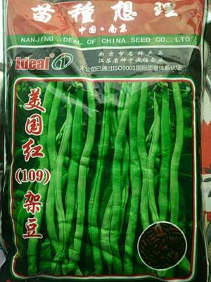这是一张关于美国红龙豆无丝豆 ≥99% 的产品图片