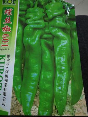 四川省绵阳市江油市螺丝辣椒苗 8~10片真叶