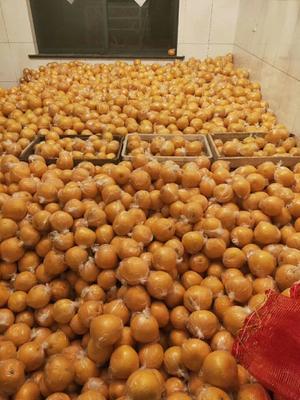 浙江省衢州市常山县胡柚 1斤以下