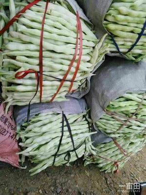 这是一张关于九粒白芸豆 15cm以上 的产品图片