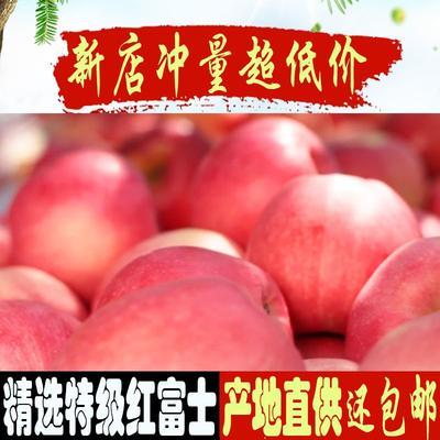 陕西省西安市雁塔区红富士苹果 70mm以上 条红 膜袋