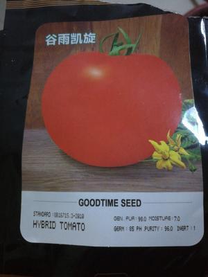 四川省绵阳市江油市大红番茄苗 四两叶一心
