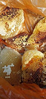 山东省潍坊市青州市野生蜂蜜 塑料瓶装 2年以上 100%