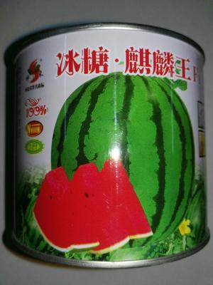 江苏省宿迁市沭阳县冰糖麒麟王西瓜种子  ≥90% 二倍体杂交种 84-24