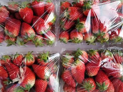 山东省烟台市莱阳市甜宝草莓 20克以上