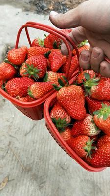 安徽省蚌埠市淮上区红颜草莓 30克以上