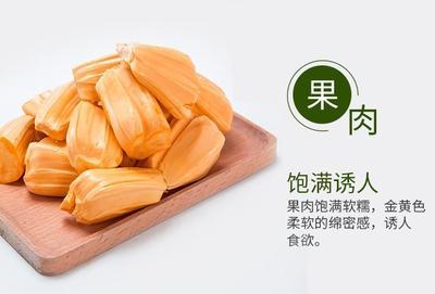 这是一张关于红肉菠萝蜜苗  诚信商家放心购的产品图片