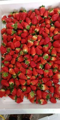 这是一张关于双流冬草莓 30克以上 的产品图片