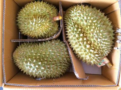 广东省广州市白云区干荛榴莲 5公斤以上 80 - 90%以上
