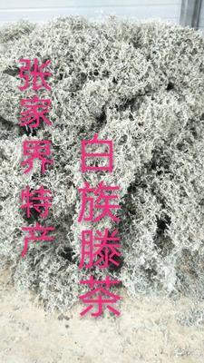 湖南省张家界市桑植县藤茶 特级 散装