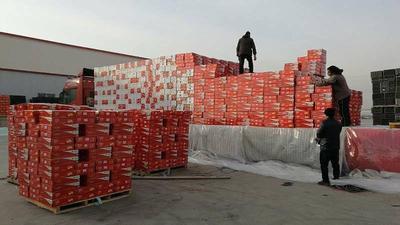 新疆维吾尔自治区乌鲁木齐市沙依巴克区阿克苏冰糖心苹果 80mm以上 全红 膜袋