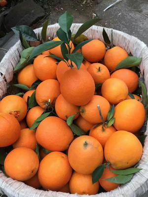 这是一张关于圆红脐橙 60 - 65mm 4-8两 的产品图片