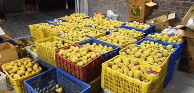 广东省广州市天河区香水柠檬 1.6 - 2两