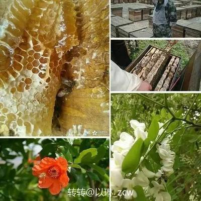 四川省遂宁市蓬溪县土蜂蜜 塑料瓶装 2年以上 100%