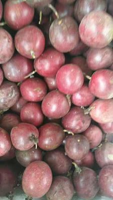 福建省漳州市芗城区紫色百香果 50 - 60克