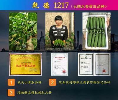 这是一张关于乾德1217小黄瓜 杂交种 ≥90% 的产品图片
