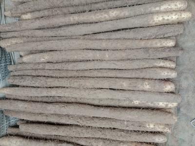 山东省菏泽市牡丹区白玉山药 40~50cm
