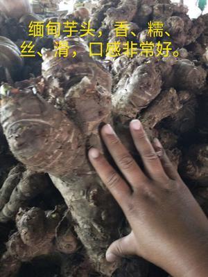 云南省德宏傣族景颇族自治州盈江县缅甸老象芋头 6cm以上