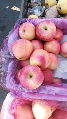 山西省临汾市曲沃县红富士苹果 80mm以上 片红 纸袋