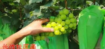 湖南省常德市澧县阳光玫瑰 2斤以上 10%以下 1次果