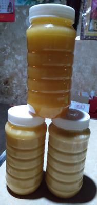 云南省昆明市石林彝族自治县土蜂蜜 塑料瓶装 2年以上 100%