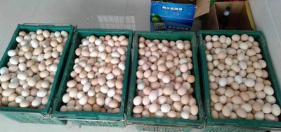 这是一张关于柴鸡蛋 食用 箱装 的产品图片
