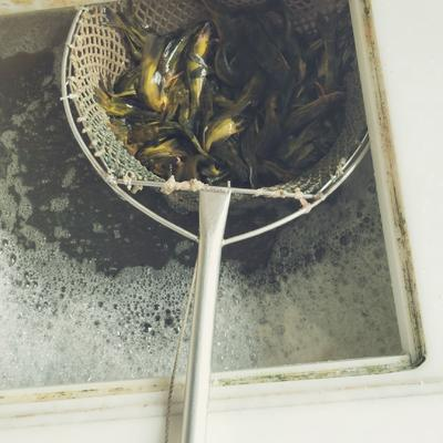 广东省佛山市南海区池塘黄颡鱼 人工殖养 0.1公斤