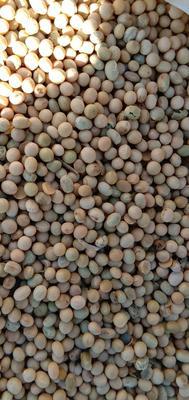 内蒙古自治区呼伦贝尔市鄂伦春自治旗青黄豆 生大豆 5等品