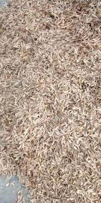 这是一张关于白蜡种子  出售白蜡种子10万斤的产品图片