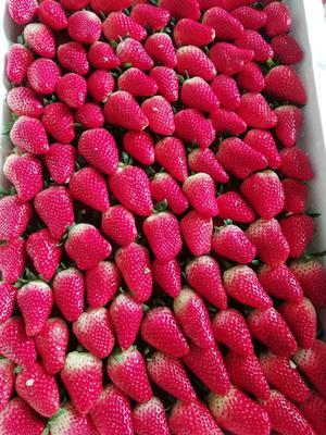 山东省临沂市沂水县甜宝草莓 30克以上
