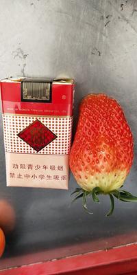 山东省东营市垦利县甜宝草莓 50克以上