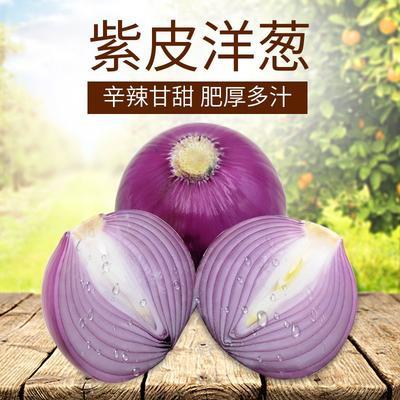 这是一张关于紫皮洋葱 5cm以下 的产品图片