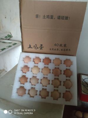 这是一张关于北京油鸡鸡蛋 孵化 箱装 的产品图片