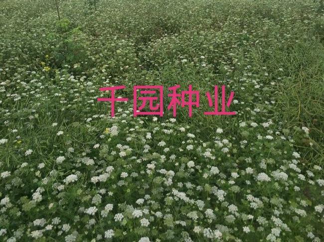 壁纸 成片种植 风景 植物 种植基地 桌面 650_486