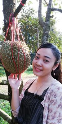 辽宁省葫芦岛市龙港区泰国金枕榴莲 3 - 4公斤 90%以上