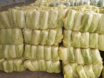 山东省泰安市肥城市北京新三号 6~10斤 净菜