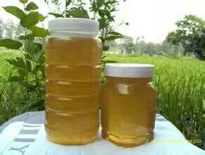 河北省保定市徐水县荆条蜜 塑料瓶装 2年以上 100%