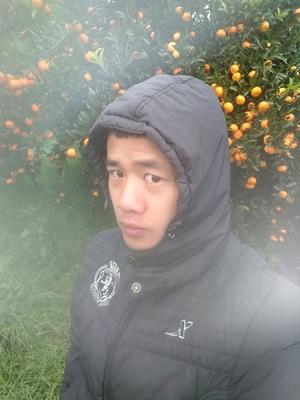 广西壮族自治区柳州市融水苗族自治县马水桔 4 - 4.5cm 1两以下