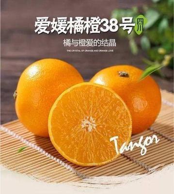 这是一张关于爱媛38号柑桔苗 移栽苗 0.35~0.5米 的产品图片