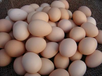 吉林省长春市南关区笨鸡蛋 食用 简包装