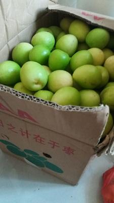 这是一张关于青枣 直口 40-50g 的产品图片