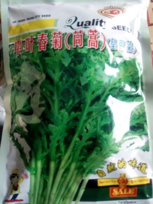 河南省周口市西华县小叶茼蒿种子
