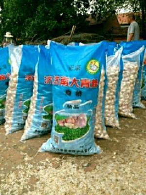 山东省济南市商河县商河大蒜 6cm以上 多瓣蒜