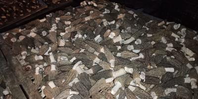 这是一张关于羊肚菌 干货 6cm~8cm 尖顶 灰黑色 人工种植 的产品图片