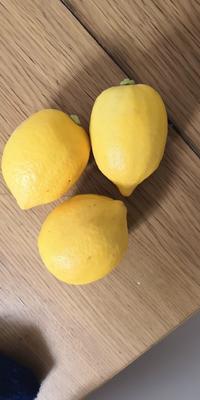 广东省广州市从化区香水柠檬 2 - 2.6两