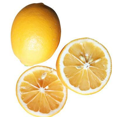 广东省广州市白云区黄柠檬 1 - 1.5两