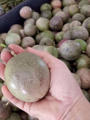 广西壮族自治区玉林市玉州区紫色百香果 70 - 80克