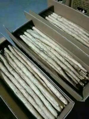 河北省衡水市安平县小白嘴白山药 20~30cm