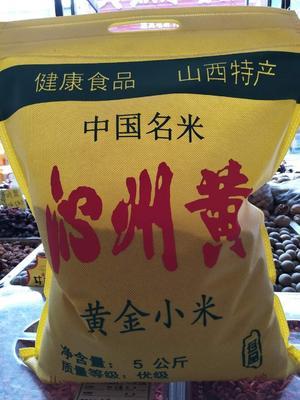 山西省太原市小店区黄金小米